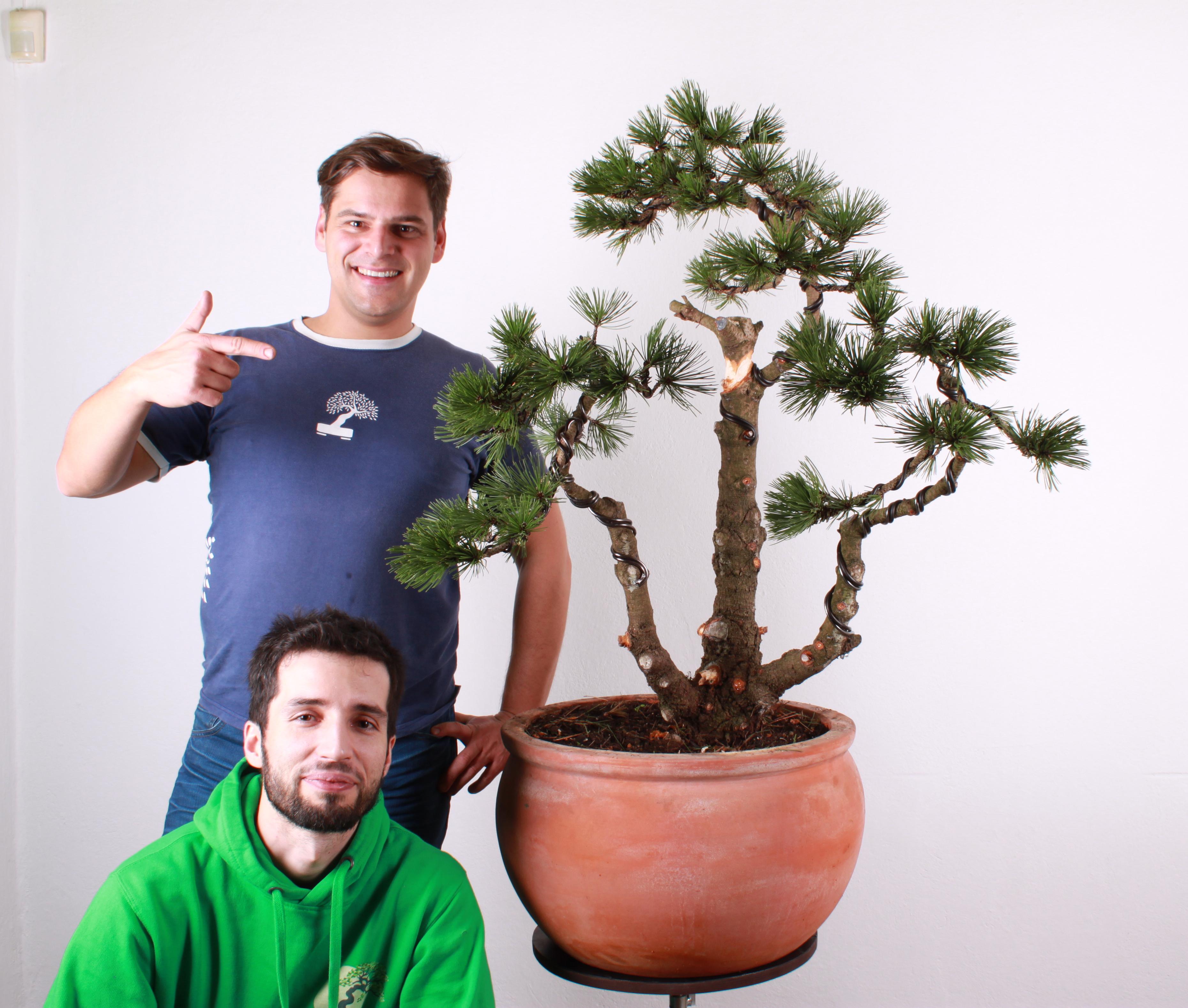 Strom po prvom tvarovaní