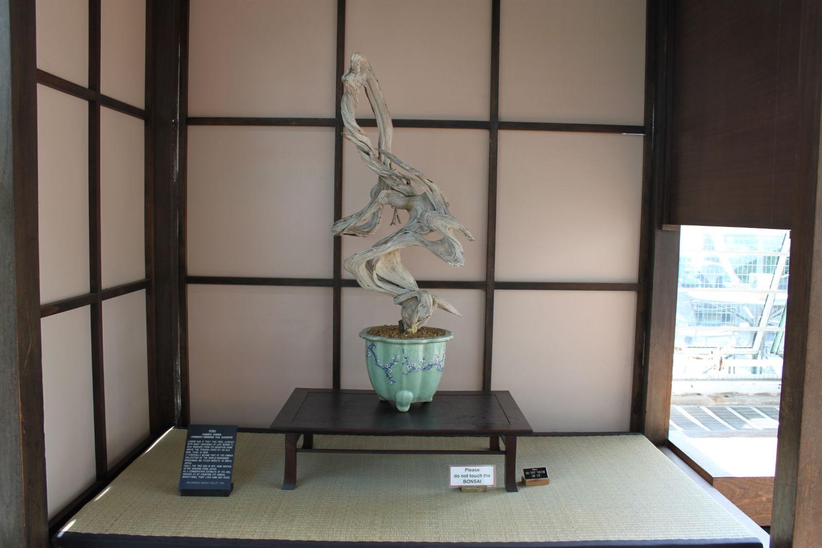 Netradičná prezentácia suchého stromu v tokonome.