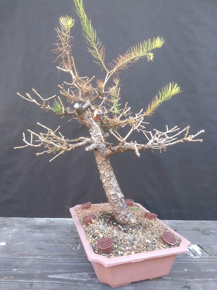 Strom pred tvarovaním