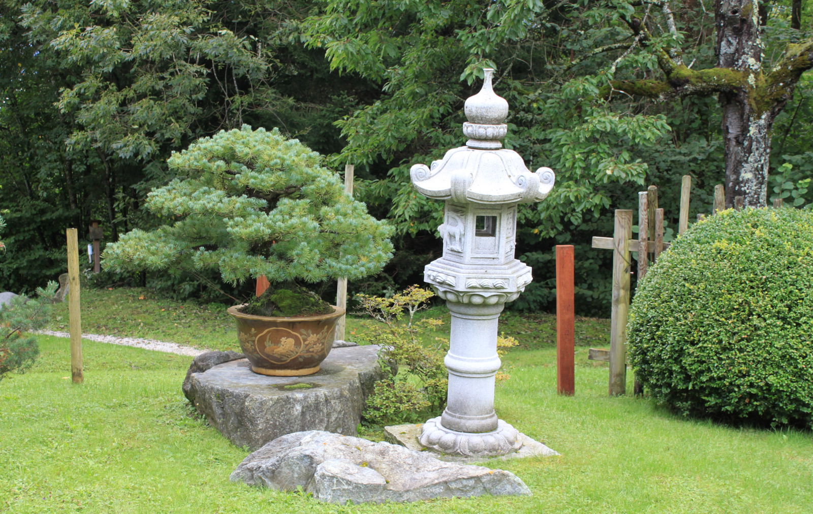 Krásne starú borovicu dopĺňa mohutná kamenná lampa.