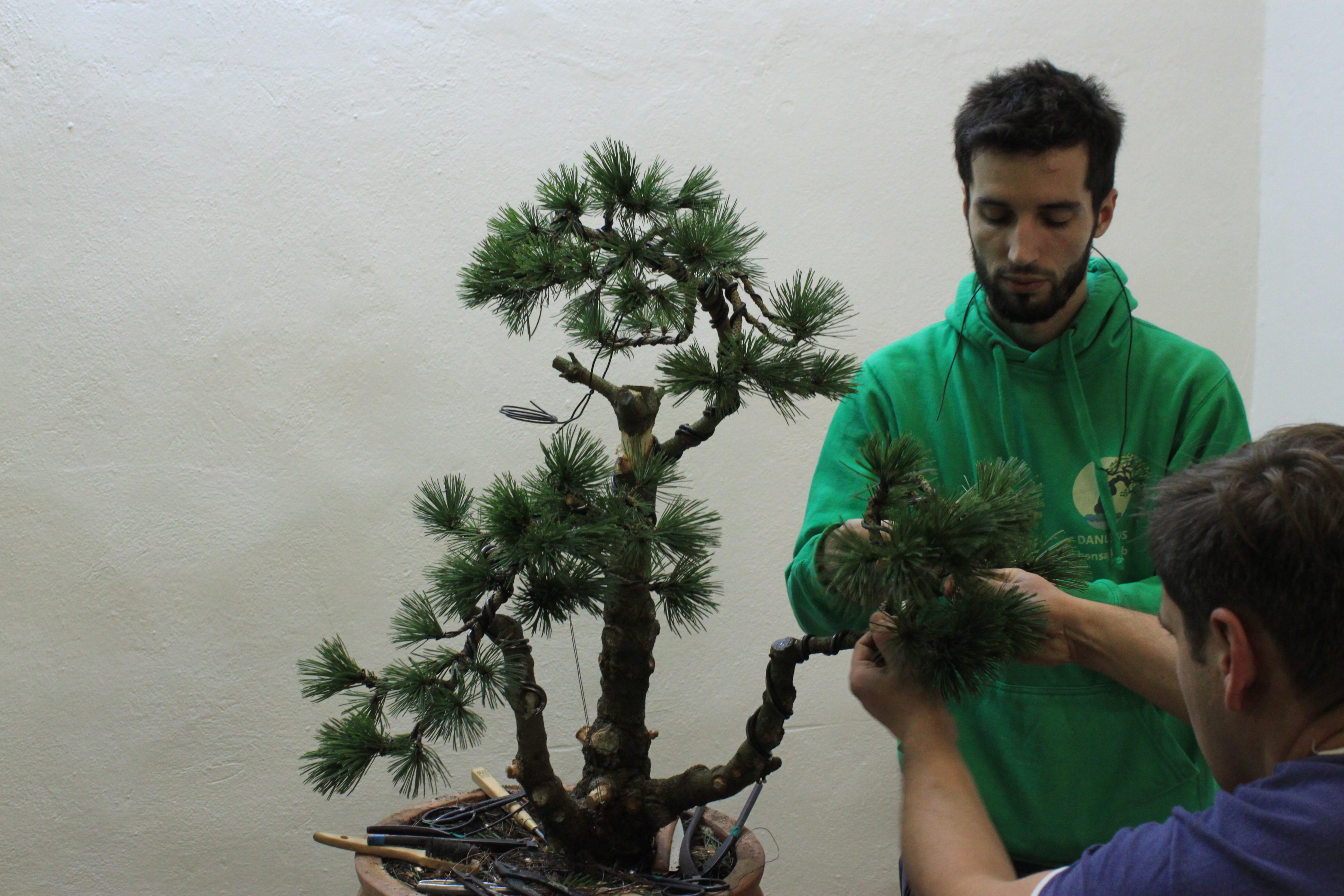 Tvarovanie pravej časti stromu