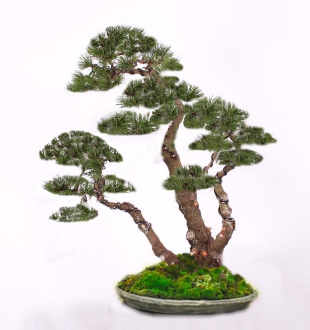 Nakres budúceho tvaru stromu