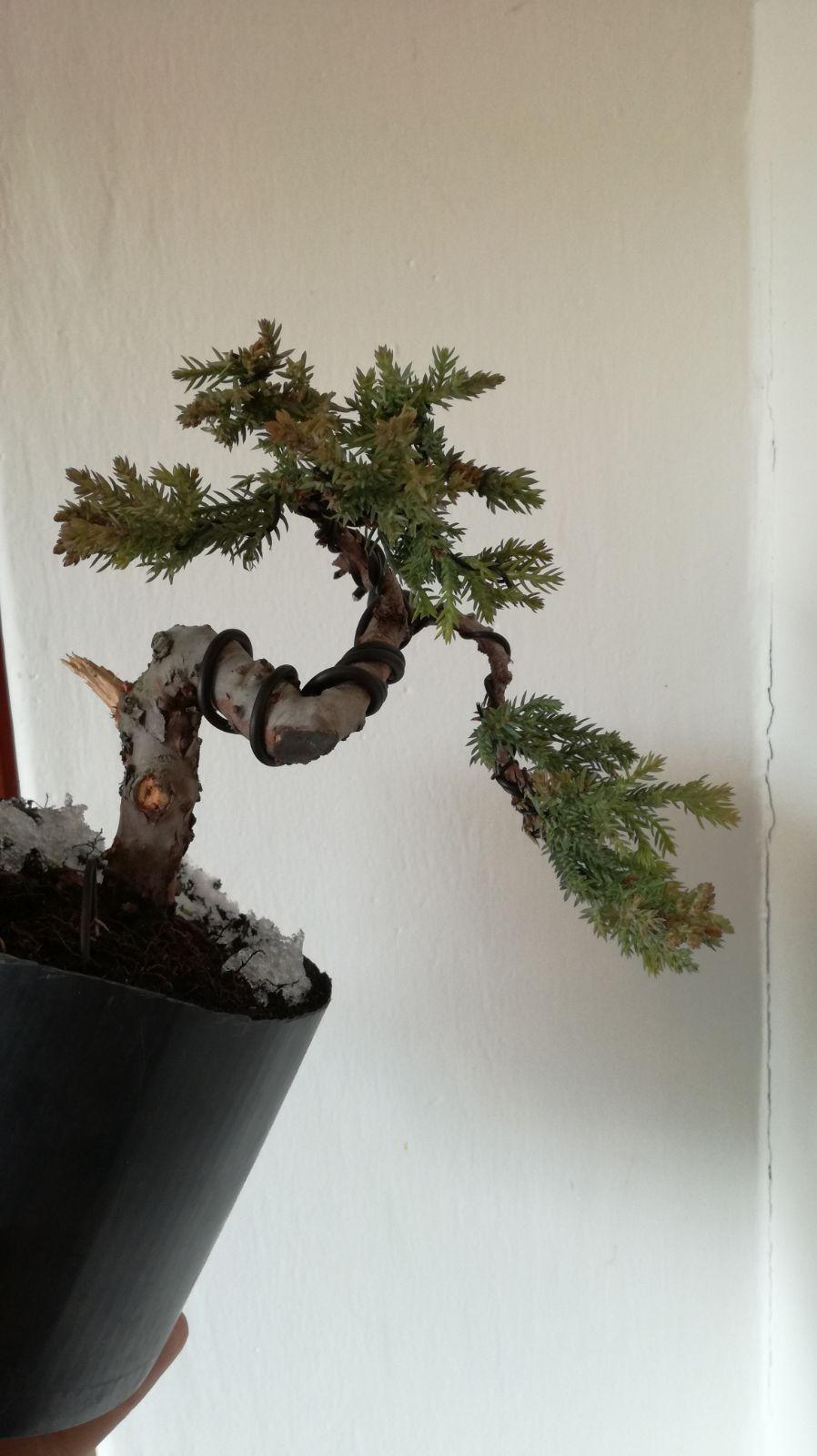 Rastov stromček