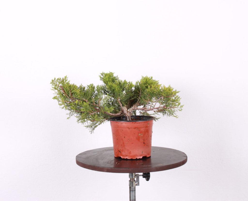 Rastlina zo záhradnictva čoskoro v novom šate