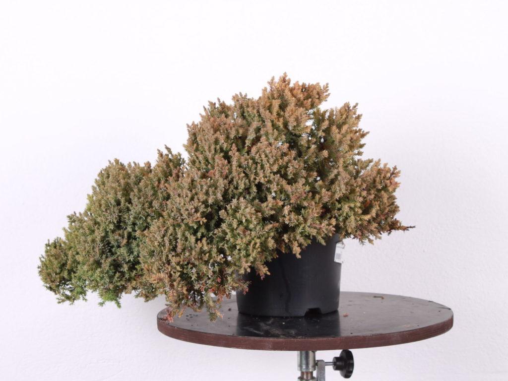 Predná strana stromu.